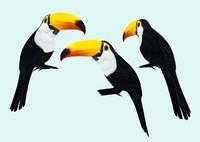 toucan 3d obj
