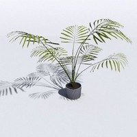 free obj mode areca palm