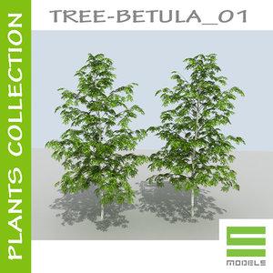 plants betula 01 tree 3d model