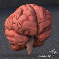 3ds human brain anatomy