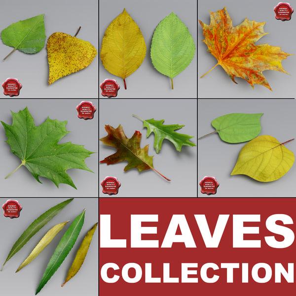 leaves set cherry 3d model