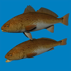 3ds red drum