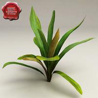 aquarium plant echinodorus 3d model