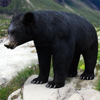 american black bear 3d model