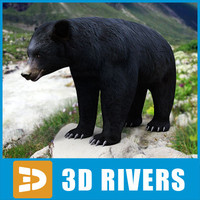 American Black Bear by 3DRivers