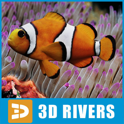 max clown fish