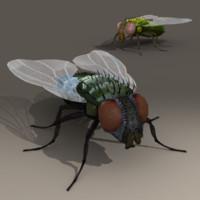 house fly 3d model