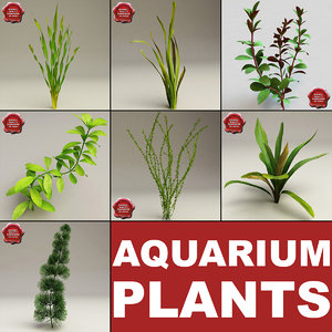 aquarium plants 3d model