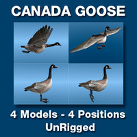 Canada Goose Four Static models