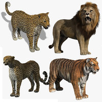 Big Cats Collection