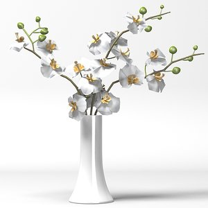 3ds max phalaenopsis orchids flowers
