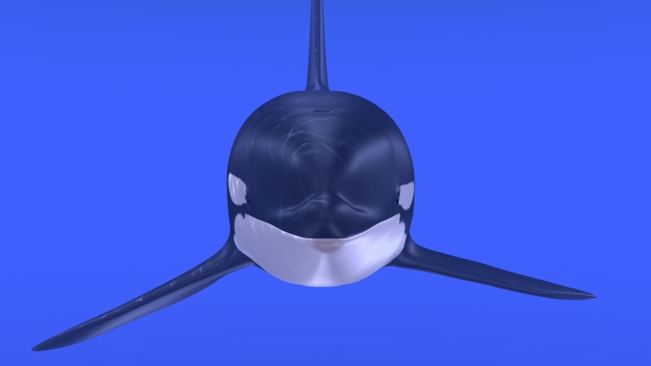 killer whale ma
