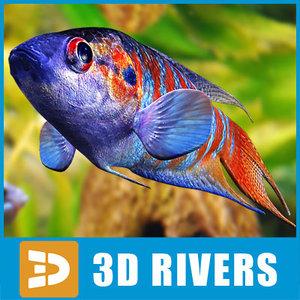 paradise fish aquarium 3d max
