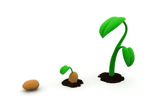 plant phases lwo