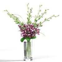 endrobium Orchids Med