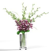3d model orchids med