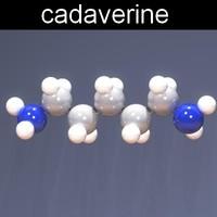 3d molecule cadaverine