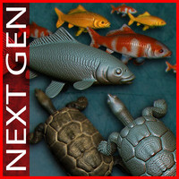 pack_koi_fish_turtle_pond