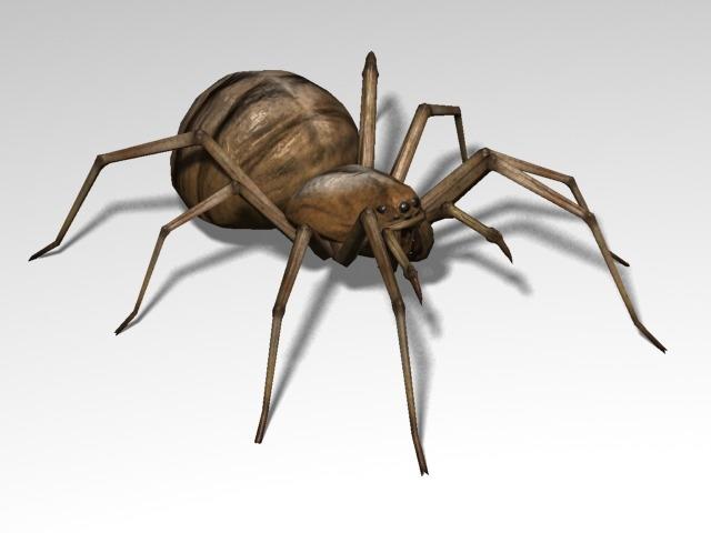 spider arachnids 3d model