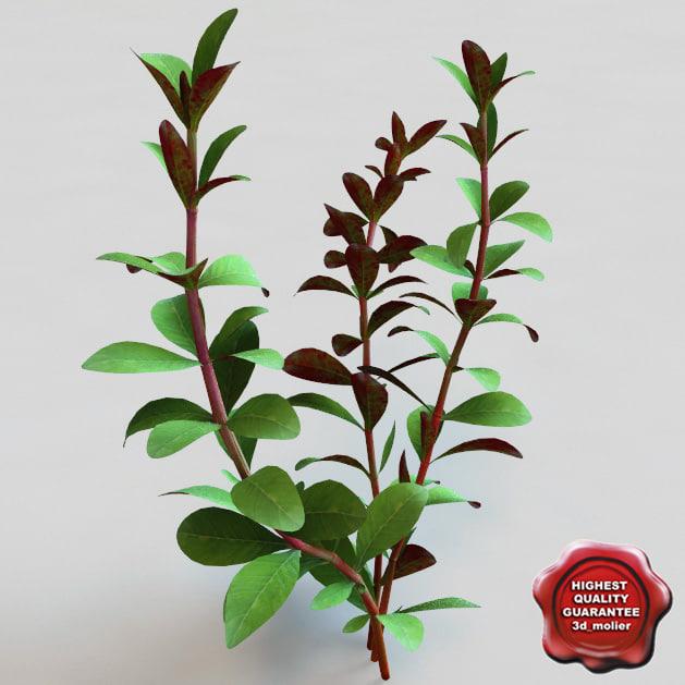 3d aquarium plant ludwigia model