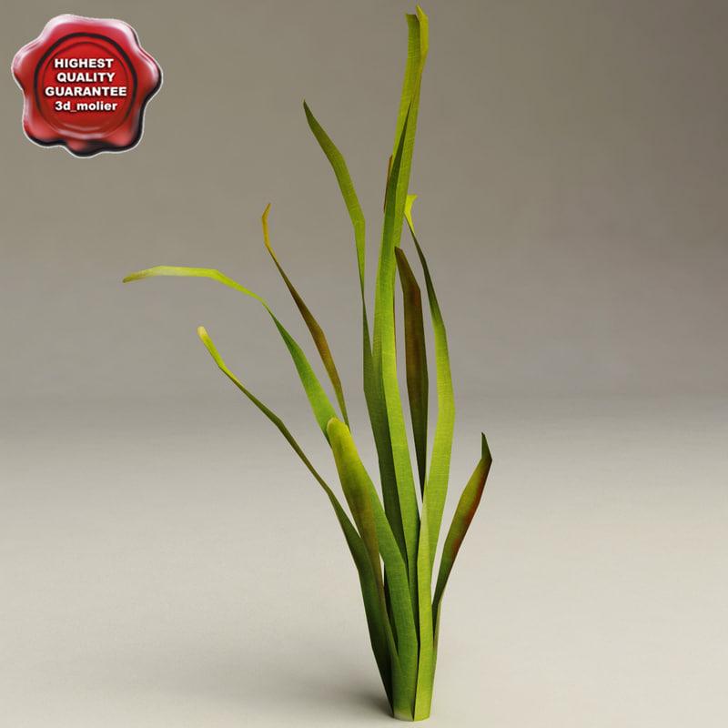 aquarium plant vallisneria gigantea 3d model