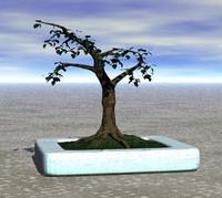 free br4 model simple bonsai