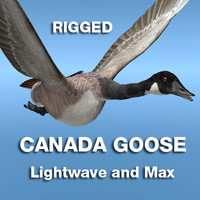 Canada Goose for Rigged for Lightwave or Max v8