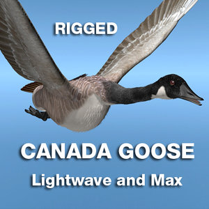 max canada goose rigged lightwave