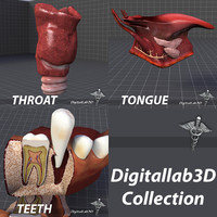 3d model tongue throat teeth
