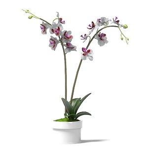 phalaenopsis orchids flower 3d model