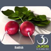 radish vegetables 3d model