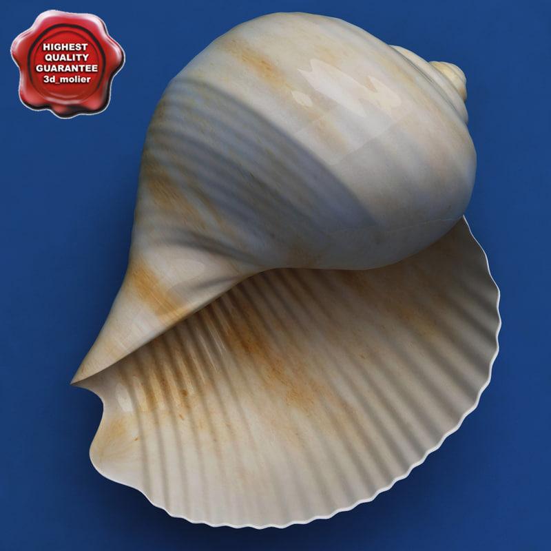 3d c4d seashell tonna