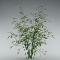 bush bamboo garden 3d model