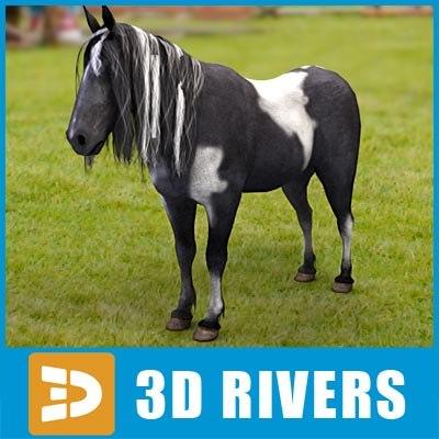 3d black wight pony horse