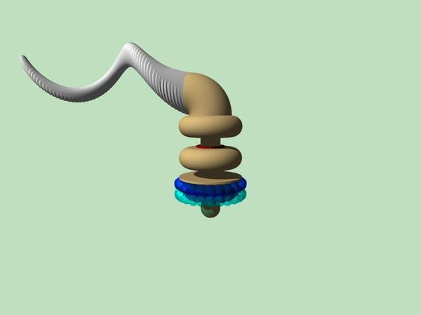animation flagellum 3ds free