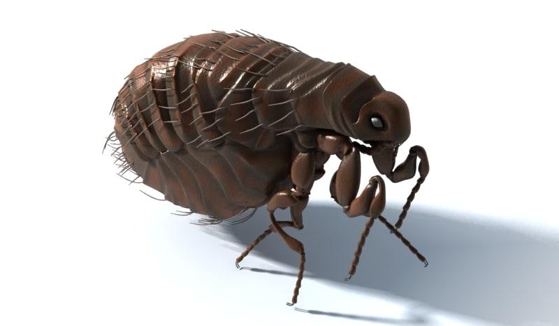 3ds max common flea