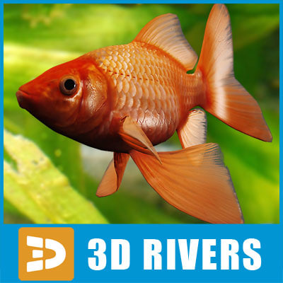 goldfish fish 3d obj