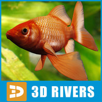 Goldfish by 3DRivers