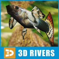 3d model guppy fish