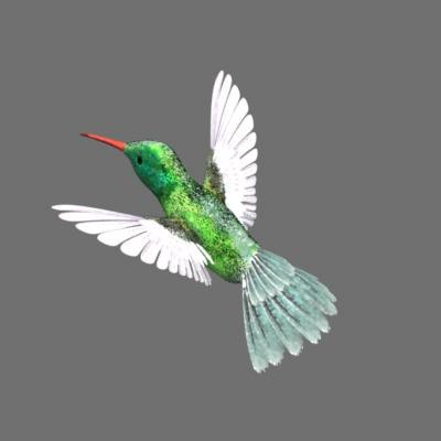 hummingbird ma