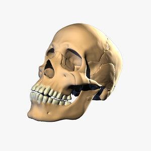 anatomically correct skull uberskull ma