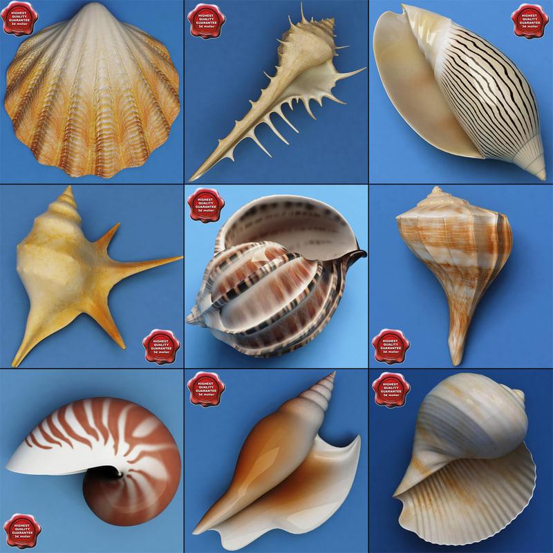 seashells v2 3d lwo