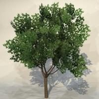 Tree_056.zip