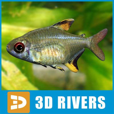 lemon tetra fish 3d model
