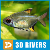 Lemon tetra by 3DRivers