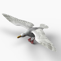 seagull sea 3d model