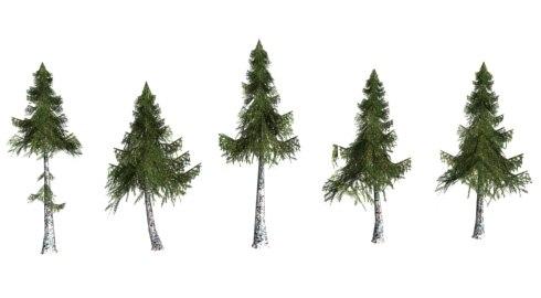 pine tree 3d model
