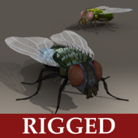 Fly - Rigged