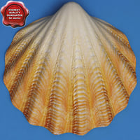 Clam Seashell
