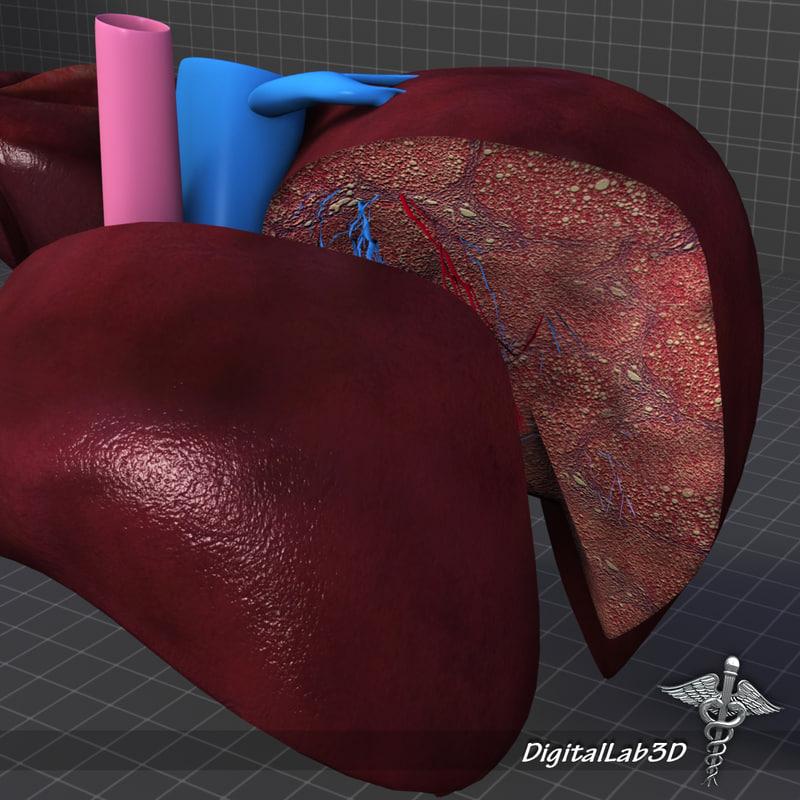 human liver anatomy 3d lwo